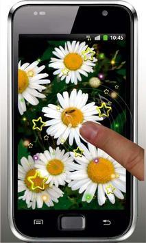 Camomile Flower live wallpaper screenshot 3