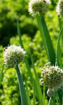 Allium Fstulosum Wallpapers apk screenshot