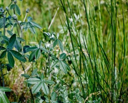 Artemisia Dracunculu Wallpaper screenshot 4