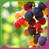 Grape Growing icon