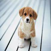 cute puppies icon