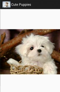 cute puppies screenshot 2