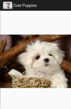 cute puppies screenshot 5