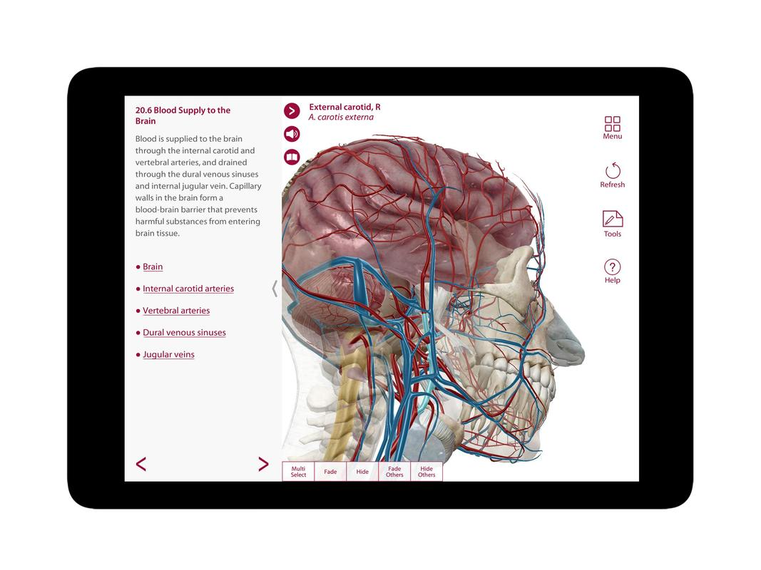 Anatomy Amp Physiology Org APK Download