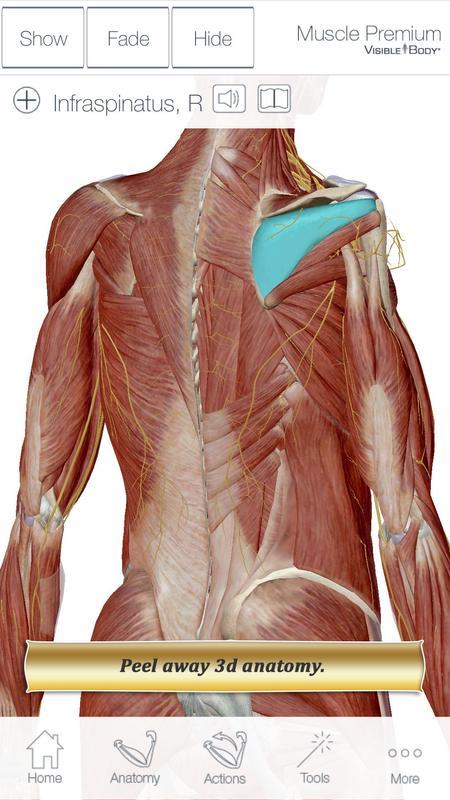 Muscle Premium For Springer Apk Download Free Medical App For