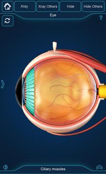 My Eye Anatomy screenshot 2
