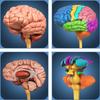 My Brain Anatomy أيقونة