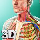 Human Anatomy APK