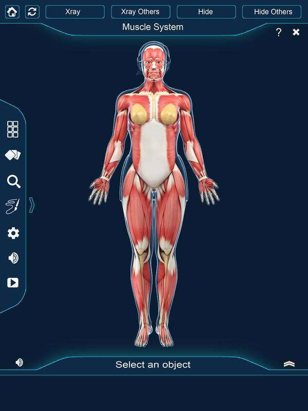 Großzügig Anatomie Und Physiologie Der 2. Ausgabe Pdf Ideen ...