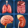 My Organs Anatomy icône