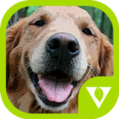 Dogs Puzzles icon