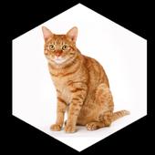 Содержание кошек дома icon