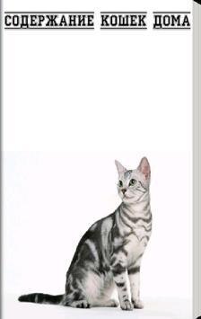 Содержание кошек дома poster