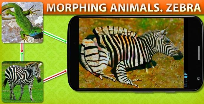 Morphing Animal Zebra poster
