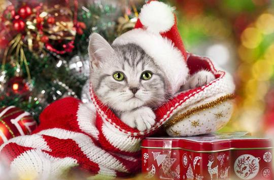 Christmas Cat live wallpaper apk screenshot