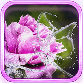 Rainy Flowers 2016 icon