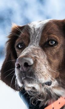 Animal World Dogs Wallpapers poster