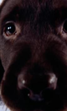 Dog Mix Theme Wallpapers apk screenshot
