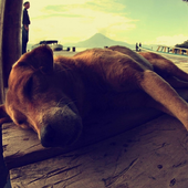 Dogs HD Wallpapers Themes icon