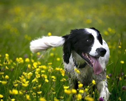 Dogs HD Wallpapers Themes apk screenshot