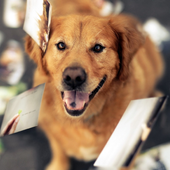 Petworld Dog Wallpapers icon