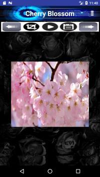 Cherry-Blossom apk screenshot
