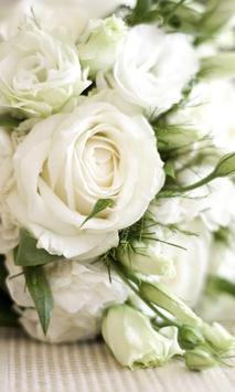 White Roses Wallpapers screenshot 4