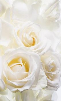 White Roses Wallpapers screenshot 1