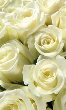 White Roses Wallpapers screenshot 2