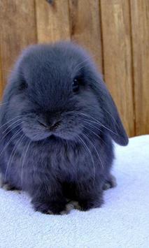 Rabbit live Wallpapers apk screenshot