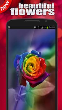 Rainbow rose Wallpaper poster