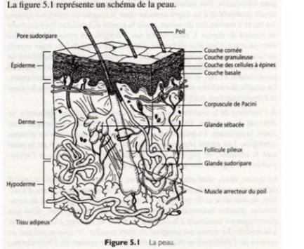 Charmant Grundlagen Der Anatomie Und Physiologie 9. Ausgabe ...