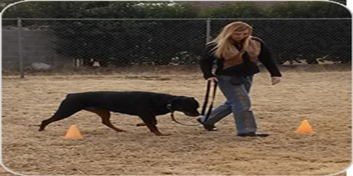 Brain Training For Dogs apk screenshot