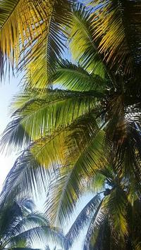 Tropical Wallpapers apk screenshot