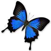 Butterfly Shooter icon