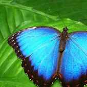 Butterfly 1 icon