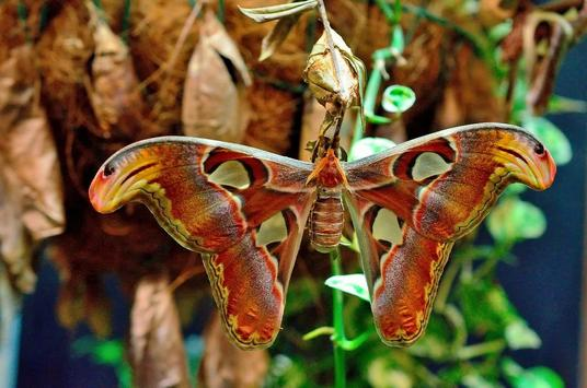 Butterfly 1 apk screenshot