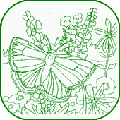 Butterfly Coloring icon