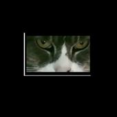Cat Eyes Visual icon