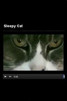 Cat Eyes Visual poster