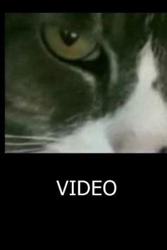 Cat Eyes Visual apk screenshot