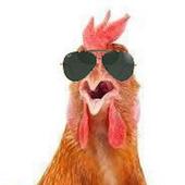 Chicken Chat icon