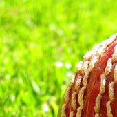 Cricket Geek Quiz icon