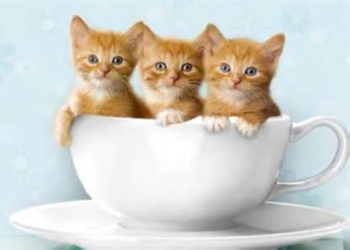 Cute Kittens Wallpaper Apk Screenshot