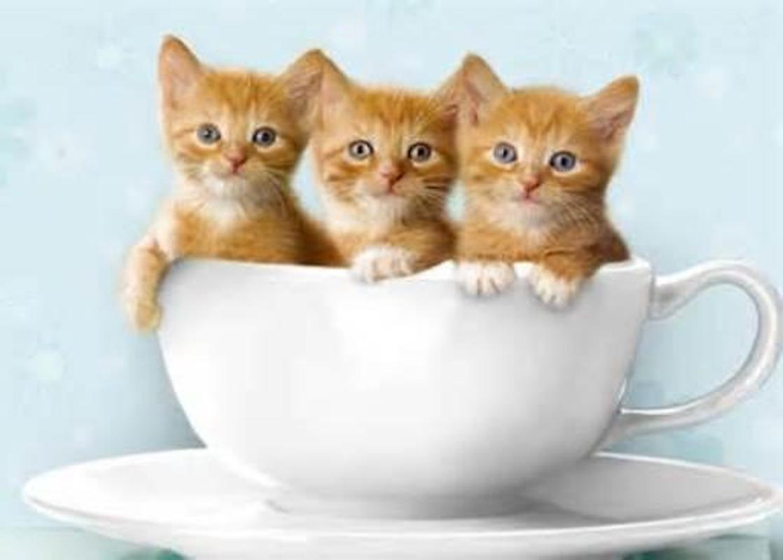 Cute kittens wallpaper apk download free personalization app for cute kittens wallpaper apk screenshot altavistaventures Images