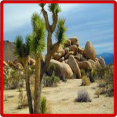 Desert Landscaping Ideas-Desert Design Landscape icon