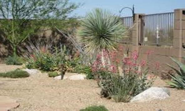 Desert Landscaping Ideas-Desert Design Landscape apk screenshot