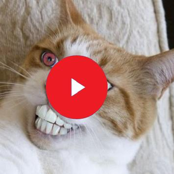 Funny Cat Videos poster