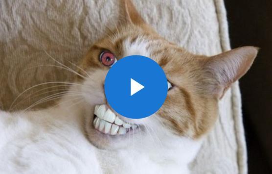 Funny Cat Videos apk screenshot