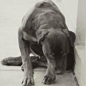 Heartwarming Dog Stories icon